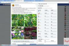 review-khoa-hoc-quang-cao-facebook-MFA-0220